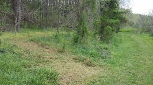 New section of trail